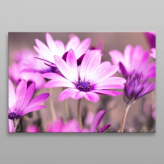 Obraz na plátne fialové kvety