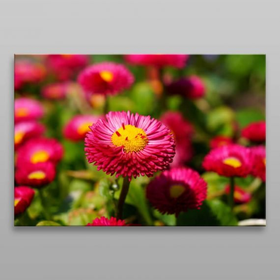 Obraz na stenu ružové kvety